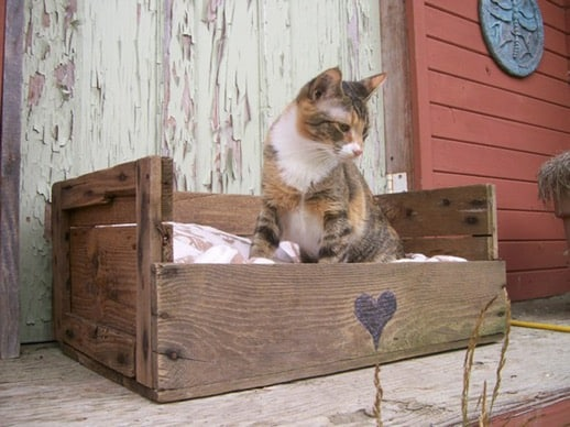 kitty bed made from pallets