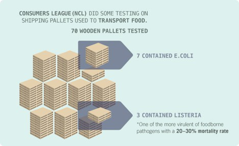 mold in wooden pallets
